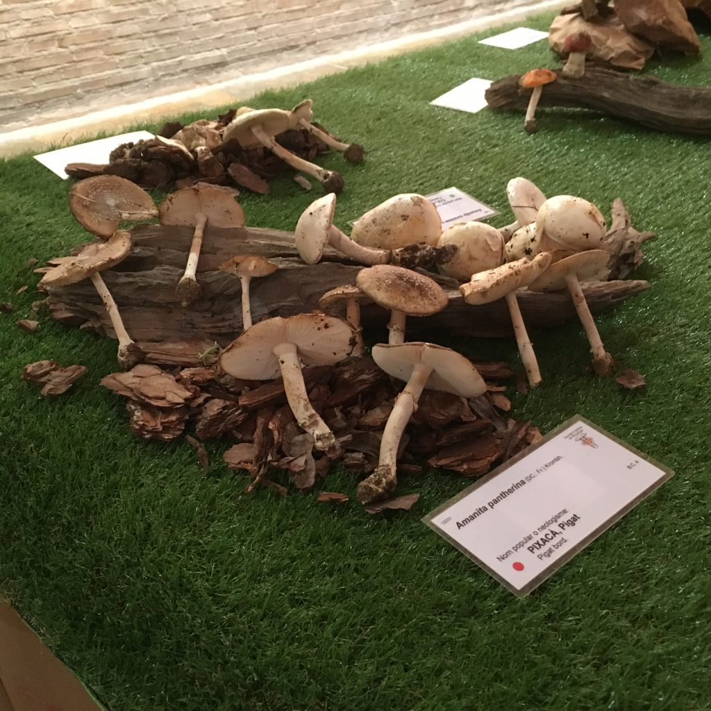 exposició de bolets de Tarragona